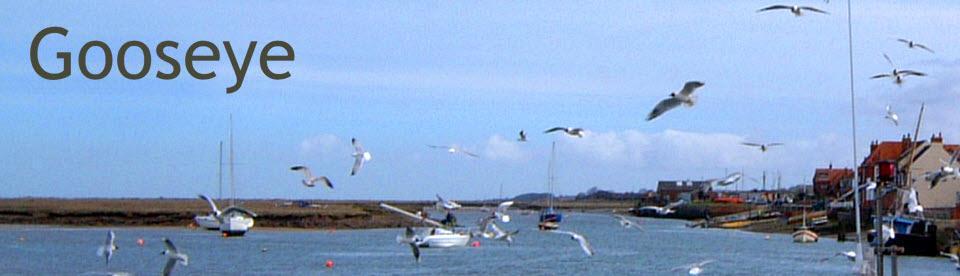 Gooseye-Header-Gulls.jpg